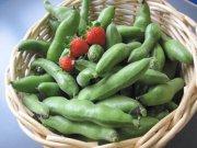 空豆大量収穫