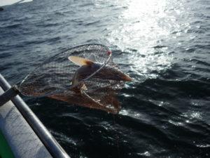 釣れたのはサメ・・・