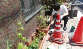 夏野菜を植えました!