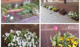 【花壇】春の訪れ